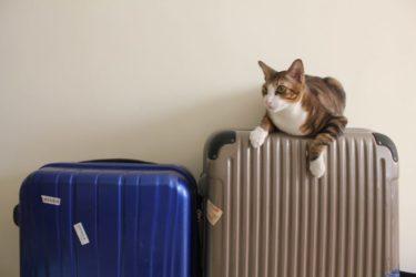 猫だけで2泊3日以上の留守番はできない?理由と解決策を紹介します