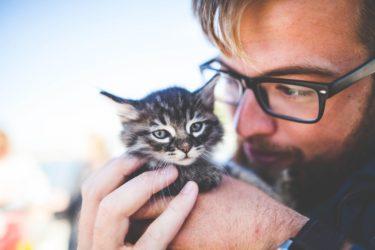 【これで安心】猫を飼うならまず揃えたい必需品+αを紹介します【初心者】
