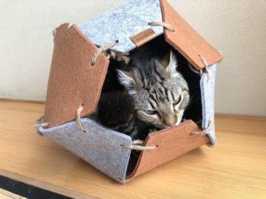 【Petneces猫ハウスレビュー】1人3役こなせるオシャレで優しい猫ハウス【実際の使用感】