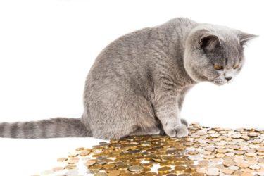 猫の生活費は月〇〇円!?知らないとまずいお金の話