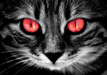 【猫なんて飼うんじゃなかった】後悔しないために知っておきたい12の原因
