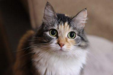 猫アレルギーの私が猫を飼うことができた!気軽に試せるおすすめの対策を紹介します