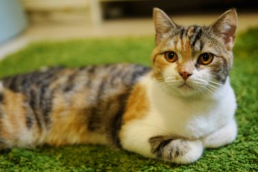 【2020年最新版】飼い猫のための寒さ対策グッズ:留守中も安心して使える寒さ対策グッズを紹介