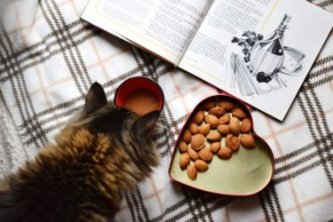【2020年最新版】猫用おやつのオススメ5選!:我が家の定番からご褒美まで紹介します