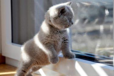 猫にとっての適温は何度?我が家の夏・冬の対策を紹介します