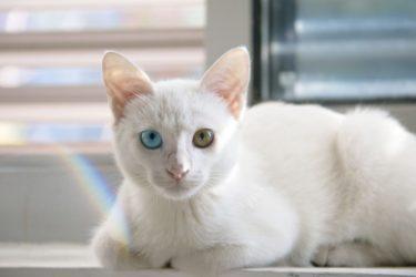 【これで安心】猫目線で考える食器の洗い方を解説します【人間用の洗剤はNG?】