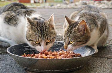 【多頭飼い必見】猫の餌に横取り防止は必要?必要性と方法を解説します