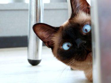 愛猫の「少食」対策!少食の猫が健康に過ごす対策と注意点