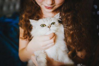 【悲報】猫の食器を洗剤で洗うのはNG!食欲不振の原因かも•••【体験談】