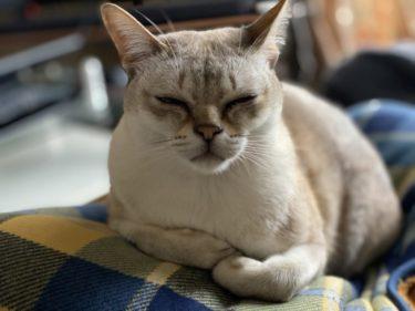 ご飯食べない!?飼い猫の食欲不振おやつは食べる場合の対策は?