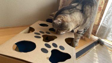 【enjoy-cat エンジョイキャット レビュー】おやつタイムが知育に変わる!おいしくて楽しい猫おもちゃです