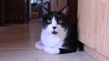 猫におやつを与える頻度はどれくらい?正しい与え方と注意点