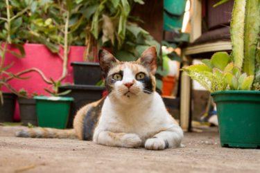 飼い猫の餌に飽きる問題を解決!対策とNG行動を分かりやすく解説します