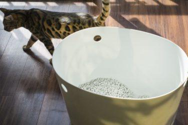 【猫トイレの選び方】欲しい猫トイレがすぐ見つかる!おすすめのトイレを厳選紹介【種類別】