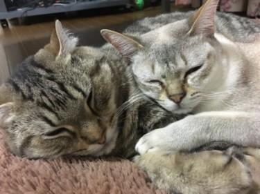 一人暮らしでも猫2匹と楽しく暮らせる!愛猫たちとの3年間で分かったこと