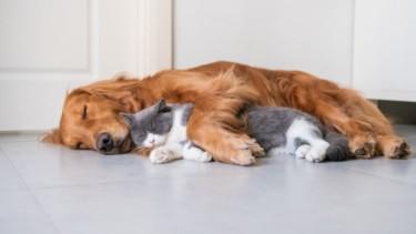 【知らなきゃヤバイ】ドッグフードとキャットフードの違いは栄養素!!猫にドッグフードがNGな理由