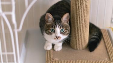 【具体例】一人暮らしの猫にはケージが必要?あると助かる7つの活用法